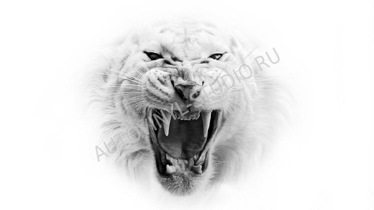 Фото огненный тигр
